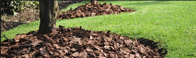 Corteza de pino en jardinería