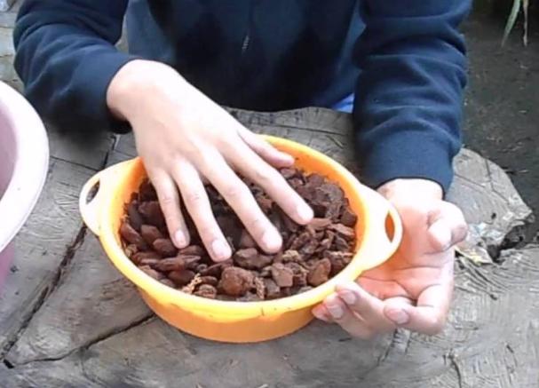 Preparando la corteza de pino