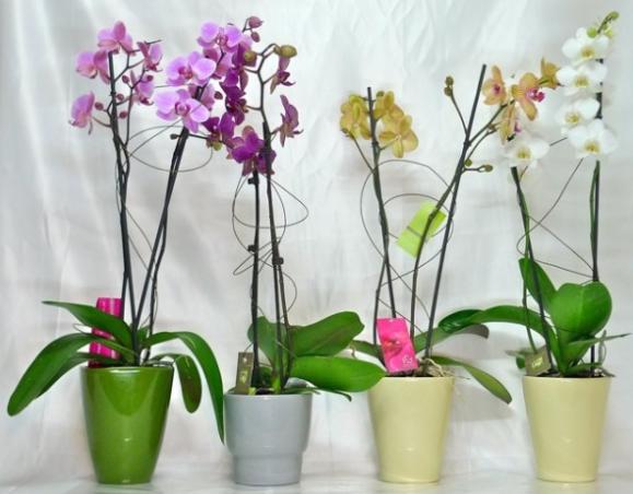 Macetas con orquídeas