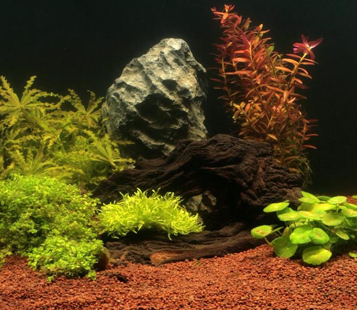 Sustrato terrarios acuáticos